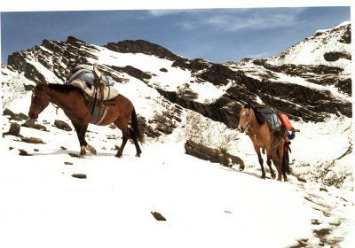 Las Mulas y Los Andes